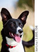Купить «Портрет собаки на улице в солнечный летний день с высунутым языком», фото № 3895194, снято 28 сентября 2012 г. (c) Николай Винокуров / Фотобанк Лори