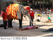 Купить «Представление с известным слоном в тропическом саду Nong Nooch, Паттайя, Таиланд», фото № 3900854, снято 7 сентября 2010 г. (c) Хмельницкий Вячеслав / Фотобанк Лори