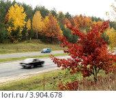 Яркие осенние деревья на обочине шоссе. Стоковое фото, фотограф Владимир Фалин / Фотобанк Лори