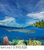 Купить «Акула плывёт над кораллами», фото № 3910026, снято 9 мая 2012 г. (c) Сергей Новиков / Фотобанк Лори