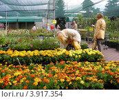 Купить «Совхоз декоративного садоводства. Москва», эксклюзивное фото № 3917354, снято 29 июня 2012 г. (c) lana1501 / Фотобанк Лори