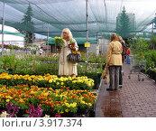 Купить «Совхоз декоративного садоводства. Москва», эксклюзивное фото № 3917374, снято 29 июня 2012 г. (c) lana1501 / Фотобанк Лори