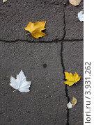 Осенние листья на сером асфальте. Стоковое фото, фотограф Андрей Мирошников / Фотобанк Лори