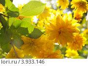 Купить «Желтые цветы», фото № 3933146, снято 13 августа 2011 г. (c) Литова Наталья / Фотобанк Лори