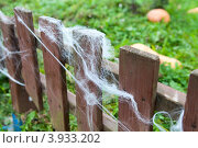 Купить «Декоративный деревянный заборчик с паутиной», фото № 3933202, снято 13 октября 2012 г. (c) Кекяляйнен Андрей / Фотобанк Лори