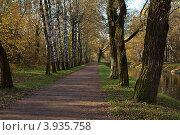 Парковая дорожка осенним утром. Стоковое фото, фотограф Александр Каримов / Фотобанк Лори