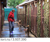 Волонтер из приюта для  бездомных животных работает с собаками. Стоковое фото, фотограф Елена Мусатова / Фотобанк Лори