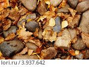 Желтые осенние листья на камнях. Стоковое фото, фотограф Андрей Новотрясов / Фотобанк Лори