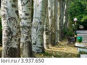 Деревья в парке. Стоковое фото, фотограф Ольга Ларина / Фотобанк Лори