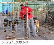 Купить «Волонтер из приюта для  бездомных животных работает с собаками», фото № 3939674, снято 7 сентября 2012 г. (c) Елена Мусатова / Фотобанк Лори