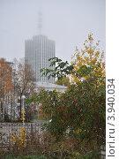 Туманное утро (2012 год). Стоковое фото, фотограф Чуров Максим / Фотобанк Лори