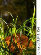 Осенний лист на траве. Стоковое фото, фотограф Владимир Булгаков / Фотобанк Лори