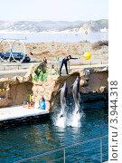 Купить «Шоу-программа с участием морских млекопитающих, Анапский дельфинарий, Большой Утриш, Анапа», фото № 3944318, снято 13 октября 2012 г. (c) Игорь Архипов / Фотобанк Лори