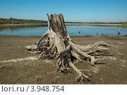 Старый пень на берегу водохранилища. Стоковое фото, фотограф Виталий Штырц / Фотобанк Лори