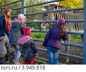 Купить «Дети смотрят на зебру в вольере. Московский зоопарк», фото № 3949818, снято 20 октября 2012 г. (c) Самойлова Екатерина / Фотобанк Лори