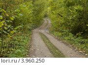 Купить «Дорога в лесу», фото № 3960250, снято 9 января 2012 г. (c) Кузьминов Юрий Юрьевич / Фотобанк Лори