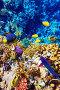 Египет, Красное море, коралловые рыбки, фото № 3966478, снято 3 сентября 2012 г. (c) Vitas / Фотобанк Лори