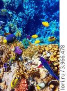 Купить «Египет, Красное море, коралловые рыбки», фото № 3966478, снято 3 сентября 2012 г. (c) Vitas / Фотобанк Лори