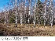 Купить «Подмосковный осенний лес», фото № 3969190, снято 27 октября 2012 г. (c) Зобков Георгий / Фотобанк Лори