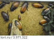 Тараканы. Стоковое фото, фотограф Вера Вершинина / Фотобанк Лори