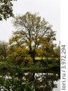 Дерево на берегу реки. Стоковое фото, фотограф Андрей Корж / Фотобанк Лори