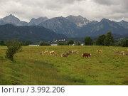 Вид на Альпы. Стоковое фото, фотограф Оскар Митревиц / Фотобанк Лори