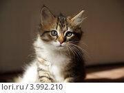 Кошка. Стоковое фото, фотограф Оскар Митревиц / Фотобанк Лори