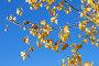 Жёлтые осенние листья на фоне голубого неба, фото № 4004706, снято 21 октября 2012 г. (c) A Челмодеев / Фотобанк Лори