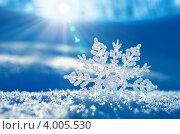 Купить «Снежинка в лучах солнца», фото № 4005530, снято 7 ноября 2012 г. (c) Икан Леонид / Фотобанк Лори