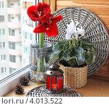 Купить «Гиппеаструм и белые цикламен на окне», фото № 4013522, снято 11 ноября 2012 г. (c) Олеся Сарычева / Фотобанк Лори