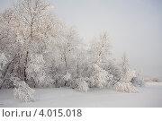 Зимний лес. Стоковое фото, фотограф Филипп Чистяков / Фотобанк Лори