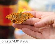Оранжевая бабочка на женской руке. Стоковое фото, фотограф Алексеева Оксана / Фотобанк Лори