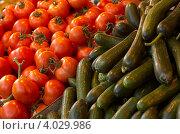 Купить «Огурцы и томаты», фото № 4029986, снято 19 ноября 2006 г. (c) Шутов Игорь / Фотобанк Лори