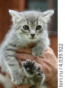 Котенок. Стоковое фото, фотограф Olga / Фотобанк Лори