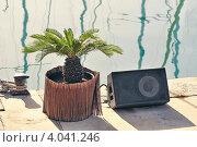Купить «Декоративная пальма музыкальная колонка возле воды», фото № 4041246, снято 15 ноября 2009 г. (c) Юрий Запорожченко / Фотобанк Лори