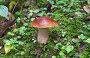 Белый гриб в лесу, фото № 4046994, снято 25 августа 2012 г. (c) FotograFF / Фотобанк Лори