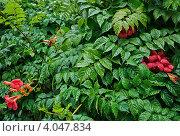 Растение с красными цветами после дождя. Стоковое фото, фотограф Екатерина Рыжова / Фотобанк Лори