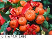 Купить «Новогоднее китайское мандариновое дерево в каплях дождя», фото № 4048698, снято 23 января 2012 г. (c) Ольга Липунова / Фотобанк Лори