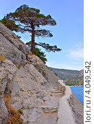 Купить «Тропа Голицына. Крым», фото № 4049542, снято 8 августа 2012 г. (c) Юрий Коблов / Фотобанк Лори