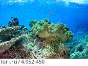 Купить «Тропический подводный пейзаж с мягким кораллом», фото № 4052450, снято 16 марта 2008 г. (c) Татьяна Белова / Фотобанк Лори