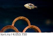 Рыбка Спинорог Пикассо. Стоковое фото, фотограф Ольга Полякова / Фотобанк Лори