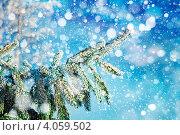 Заснеженная ветка ели. Стоковое фото, фотограф Владимир Сазонов / Фотобанк Лори