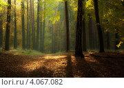 Лес. Стоковое фото, фотограф Ирина Свириденко / Фотобанк Лори