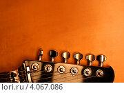 Гриф. Стоковое фото, фотограф Ирина Свириденко / Фотобанк Лори