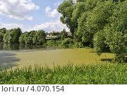 Купить «Летний пейзаж, пруд, заросший ряской», эксклюзивное фото № 4070154, снято 25 июня 2012 г. (c) lana1501 / Фотобанк Лори