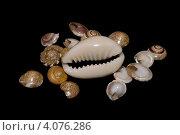 Морские раковины. Стоковое фото, фотограф Валентин Ясенев / Фотобанк Лори