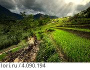 Крестьяне работают на рисовых террасах. Стоковое фото, фотограф Soft light / Фотобанк Лори