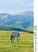 Лошадь пасется на горном лугу. Стоковое фото, фотограф Elnur / Фотобанк Лори
