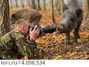 Купить «Фотограф и дикий кабан - нос к носу», фото № 4098534, снято 4 ноября 2012 г. (c) Эдуард Кислинский / Фотобанк Лори