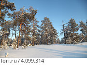 Зима в тайге. Югра (2012 год). Редакционное фото, фотограф Валерий Акулич / Фотобанк Лори